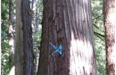 marked tree in forest