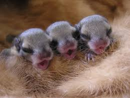 Newborn 3 of them